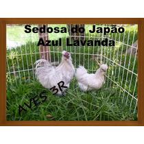 Ovos De Sedosa Do Japão