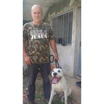 Dogo Argentino Adestrado. Foxhound