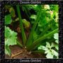 Aipo Ou Salsão Ervas Sementes Hortaliça