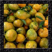 Sementes Selecionadas Para Mudas Da Fruta Mexerica Caipira