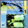 Antarctica 1 Dólar 2011 Cédula Polímero Pinguins Fe