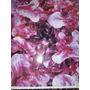 9.000 Sementes De Alface Mimosa Rubi - Pacote Com 10gr