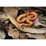 Substrato Terrário Tarântula Corn Snake Gecko Bcc Natural