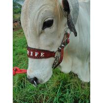 Cabresto Para Bovinos Personalizado Com O Nome Do Seu Animal