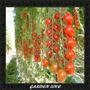 Frete Grátis*** Sementes Tomate Samambaia P/ Mudas + Brinde