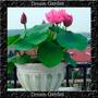 Flor De Lotus Cores Sortidas Sementes Flor Pra Mudas