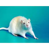 Kit De Neonatos Para Alimentação De Animais Exóticos