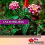 Chá De Melissa - Combate Dor De Cabeça E Enxaquecas - 183*