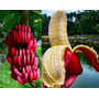 Muda De Banana Vermelha Rizoma