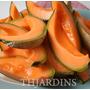 Melão Cantaloupe Coração De Ouro Sementes Frescas P/ Mudas