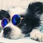 Kit 5 Óculos De Sol Pet - Gatos Cachorros Peq - Brinquedos E Boneca Blythe  - Varias Cores Em Estoque Original
