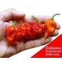 Sementes Pimenta Carolina Reaper Hp22b Frete Gratis!!