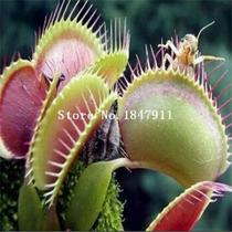 Sementes De Plantas Carnívoras