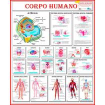 Mapa Do Corpo Humano Célula Crânio Boca Olhos 120 X 90 Cm