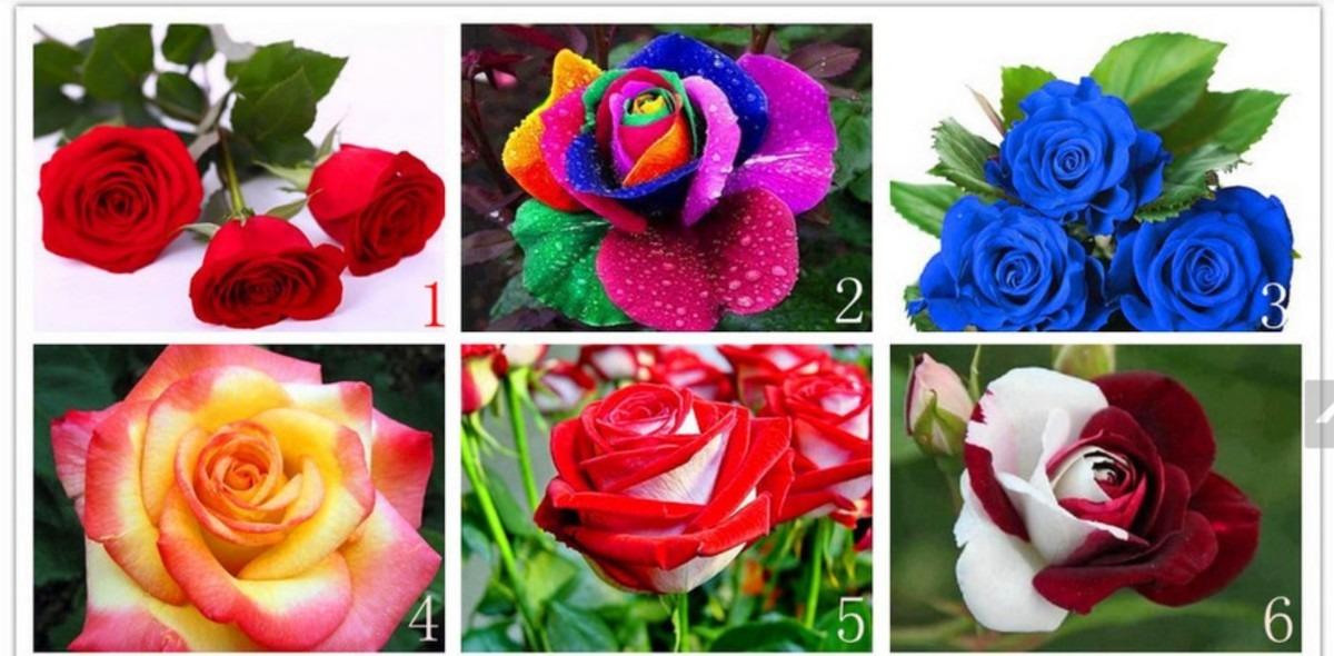 90 sementes rosas exóticas 9 tipos e cores  frete grátis