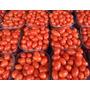 100 Sementes Tomate Carolina Cereja + Frete Gratis!