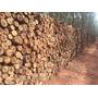 Lenha De Eucalipto Ecológico - 10 Unidades 20cm
