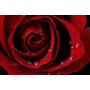 Adesivo Papel De Parede Flores Rosas Lugares Cidade Paisagem