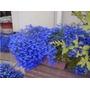 700 Sementes De Lobélia Azul P/ Mudas Flores Jardim E Vaso