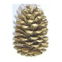 Pinha Natural Decorativa P Árvore De Natal Pintura Dourada
