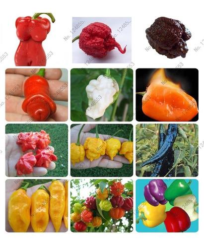 Kit 100 Sementes Variedades De Pimenta Especiais Raras