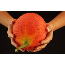 Sementes Fruta Asiatica Gac Fruit Momordica Cochinchinensis