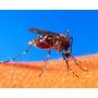 Super Pacotão 25.000 Sementes Crotalária Combate Dengue Zika