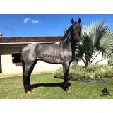 Cavalo Mangalarga Marchador Teorema Do Calambau Pelagem Rosi
