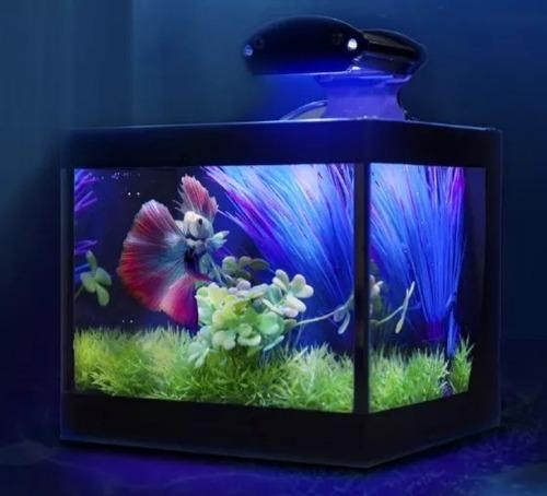 Aquário Beteira Aquabetta 3.8lts - Lum. Led/plantas/ração