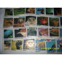 Figurinhas Ping Pong Pantanal Avulsas (cada)