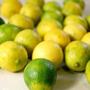 Mudas De Limão Galego