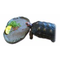 Jabuti: Bebedouro + Comedouro (animais Jovens, Adultos)