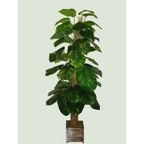Planta Artificial Árvore Jiboia C/ 50 Fls - 2,10m