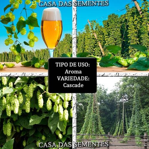 Sementes De Lupulo Lupulus Cerveja - Variedade À Sua Escolha