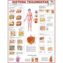 Mapa Sistema Tegumentar-o Corpo Humano