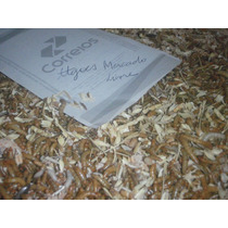 100 Larvas De Tenebrio Molitor - Top Qualidade