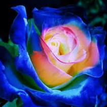 Rosa Dragão Azul Flor Para Bonsai Gramas Jardins 10 Sementes