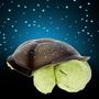 Luminária Tartaruga Projetora De Estrelas Pelucia
