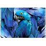 Canga De Praia Pássaro Arara Azul/ Souvenir Do Brasil