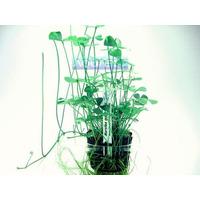 Planta M1 Marsilea (trevo 4 Folhas) - Aquapet
