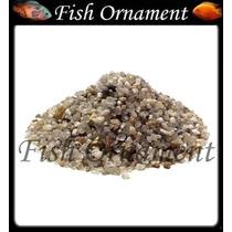 5 Kg De Cascalho Natural N 1 Fish Ornament