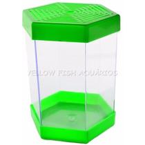 Beteira Aquário 1 Litro Litwin Verde Para Peixe Betta