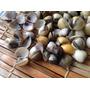 Conchas Do Mar Natural Artesanato/decoração Aquário (2 Kg )