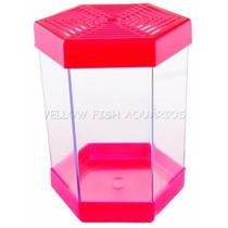 Aquário Beteira 1 Litro Litwin Rosa Para Peixe Betta