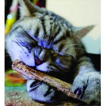 Catnip Stick - Limpeza Dos Dentes E Muita Diversão Para Gato