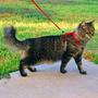 Coleira E Guia Peitoral Para Gatos