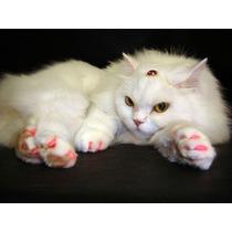 Unha Capa Protetor Gato Unhas Gatos - Frete Gratis Brasil!