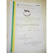 Lindissima Faca Formiga Cabo Chifre Cervo Arg..certificada