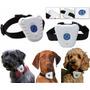 Promoção!!! Adestramento Canino