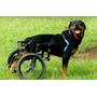 Cadeira De Rodas Para Cão Rottweiler Até 35kg Maxlocomotion